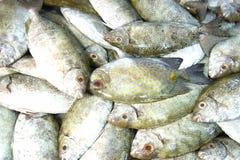 Peixes coloridos para a venda Fotografia de Stock
