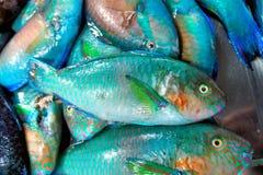 Peixes coloridos para a venda no mercado público. Imagem de Stock Royalty Free