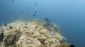 Peixes com o recife de corais subaquático video estoque