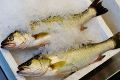 Peixes congelados fotografia de stock royalty free