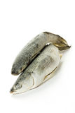 Peixes congelados foto de stock