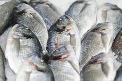 Peixes congelados Imagem de Stock