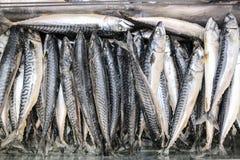 Peixes CONGELADOS fotos de stock