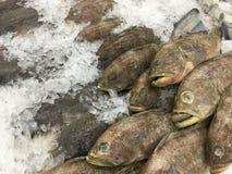 Peixes congelados Imagens de Stock Royalty Free
