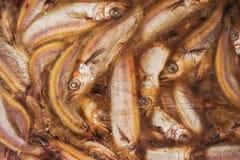 Peixes CONGELADOS briquette imagens de stock