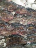 Peixes congelados do tilapia imagem de stock
