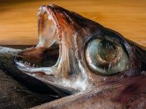 Peixes congelados inoperantes com uma boca aberta Imagens de Stock Royalty Free
