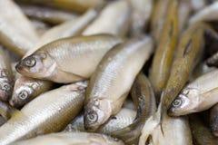 Peixes CONGELADOS Mercado dos Freshfish brema da Porca-cabeça Venda dos peixes no mercado Peixes do sargo no gelo Peixes frescos  Imagem de Stock