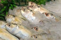 Peixes congelados no gelo no mercado Imagens de Stock Royalty Free