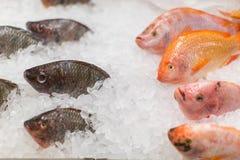 Peixes congelados no gelo na loja mercado Fotos de Stock