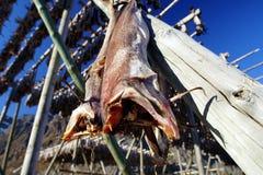 Peixes conservados em estoque Imagem de Stock