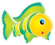 Peixes corais Imagem de Stock Royalty Free