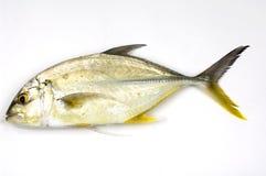 peixes crus Imagem de Stock Royalty Free