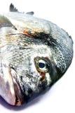Peixes crus 3 Fotografia de Stock