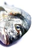Peixes crus 4 Fotografia de Stock