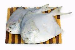 Peixes crus frescos Fotos de Stock