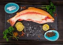 Peixes crus frescos da truta arco-íris com as especiarias na tabela de madeira escura imagem de stock
