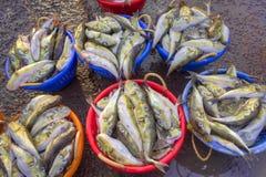 Peixes crus na cesta Imagem de Stock