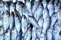 Peixes crus Foto de Stock