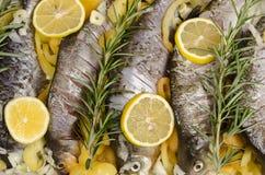 Peixes crus preparados cozinhando Fotos de Stock Royalty Free
