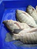 Peixes da carne Imagem de Stock