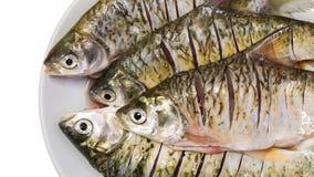 Peixes da carpa Fotos de Stock