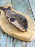 Peixes da carpa em uma placa de madeira Fotografia de Stock