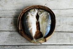 Peixes da cavala Fotografia de Stock Royalty Free