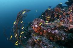 Peixes da estação da limpeza Foto de Stock