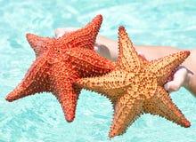 Peixes da estrela Fotos de Stock