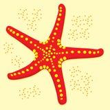 Peixes da estrela Fotografia de Stock