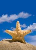 Peixes da estrela imagens de stock