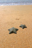 Peixes da estrela II Fotografia de Stock Royalty Free
