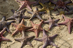 Peixes da estrela na areia Fotografia de Stock Royalty Free