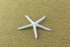Peixes da estrela na areia Fotos de Stock Royalty Free