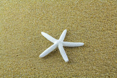 Peixes da estrela na areia Foto de Stock Royalty Free