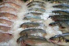 Peixes da fileira em um gelo Fotos de Stock Royalty Free