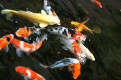 peixes da lagoa Fotos de Stock