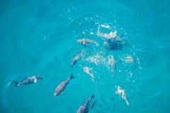 Peixes da multidão que nadam apenas abaixo da superfície da água fotos de stock