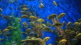 Peixes da nadada diferente da espécie em um grande aquário vídeos de arquivo