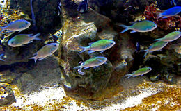 Peixes da natação fotos de stock
