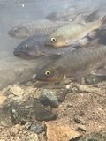 Peixes da queda da água foto de stock