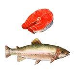 Peixes da truta de mar, ilustração da pintura da aquarela em um fundo da arte do Livro Branco Fotografia de Stock