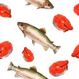 Peixes da truta de mar Ilustração feito a mão da pintura da aquarela em um fundo da arte do Livro Branco Foto de Stock Royalty Free