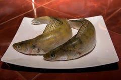 Peixes da vara de Pike Imagem de Stock Royalty Free