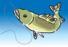 Peixes de água doce Imagens de Stock