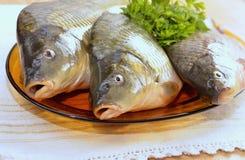 Peixes de água doce Foto de Stock Royalty Free