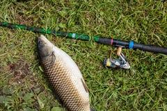 Peixes de água doce e varas de pesca de travamento com os carretéis da pesca na grama verde Caso amoroso branco e vara de pesca c Fotos de Stock