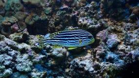Peixes de água salgada coloridos no aquário grande, opinião cinemático do close up video estoque