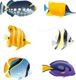 Peixes de água salgada tropicais Fotografia de Stock